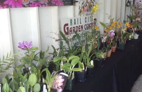 Beautiful blooming orchids for sale