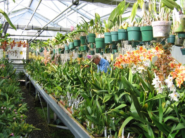 r.stone in his greenhouse